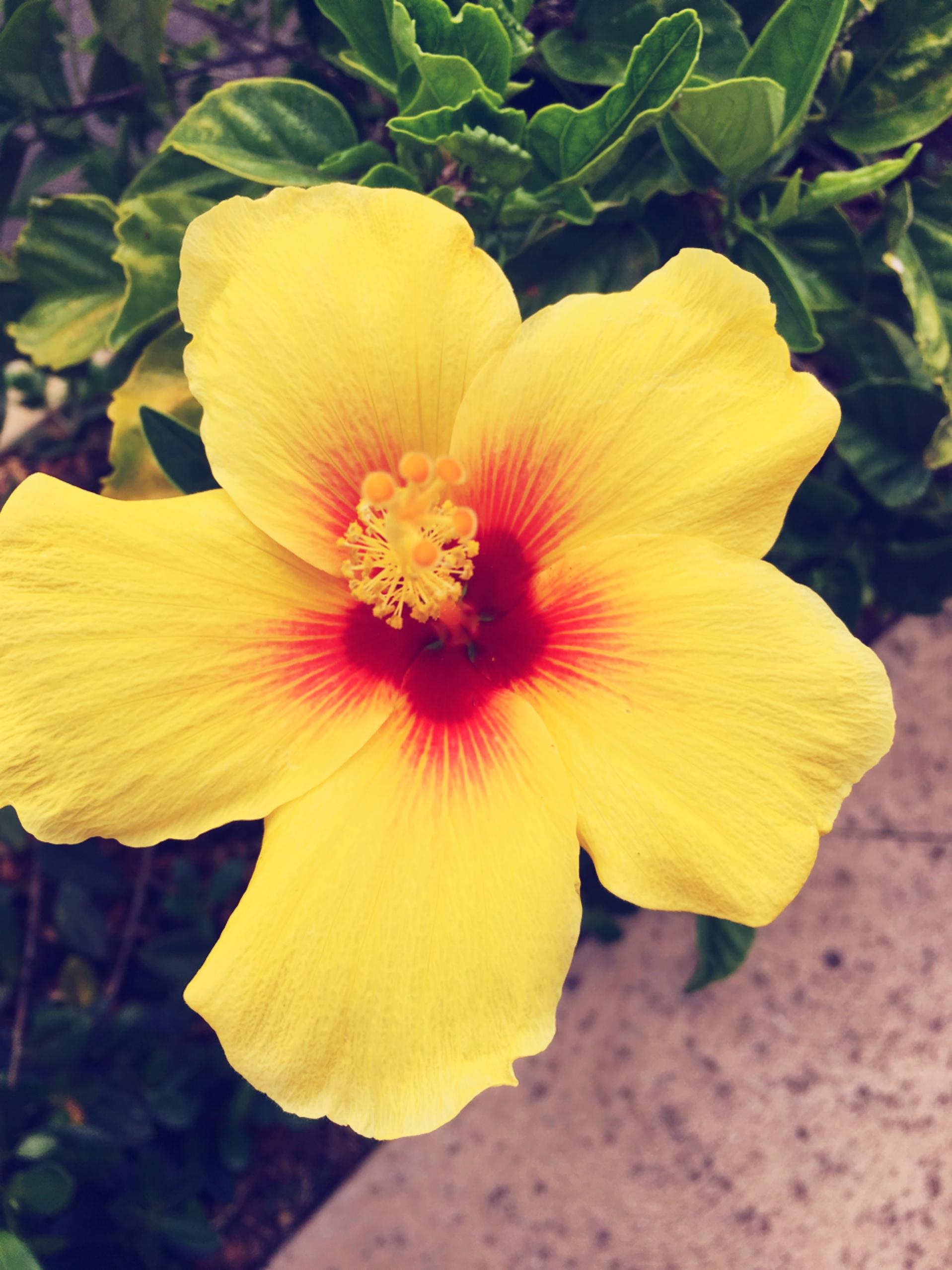 Happy Aloha Friday Rhhj